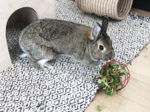 Nini med rød legetøjsbold til kaniner