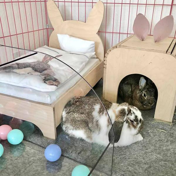 kaniner med seng og hus