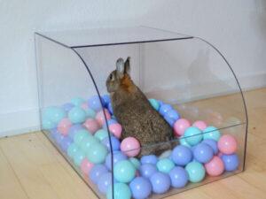 boldbassin med kanin der leger