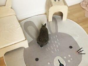 rundt gulvtæppe med kanin og kaninhus