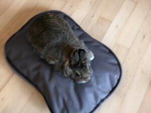 brun oval pude med kanin på
