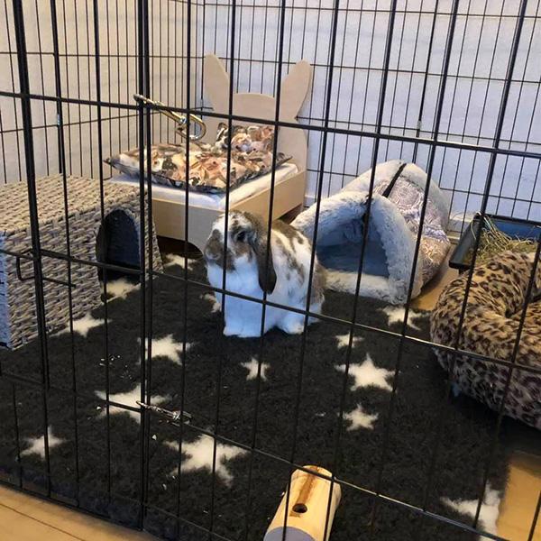 knitrehule til kaniner i basen