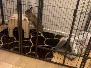giraftæppe kanin knitrehule