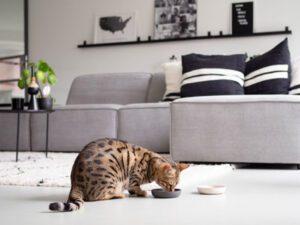 kat spiser af bambus skål