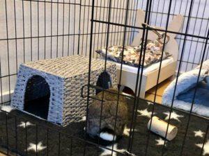 papirgarn hus med kanin udenfor