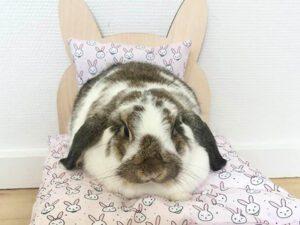 kanin i seng med lyserøde kaniner