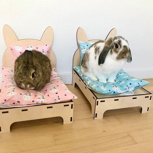 kaniner i to senge
